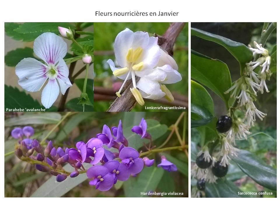 Des Fleurs Nourricieres Dans Le Jardin En Hiver Jaccueillelanature